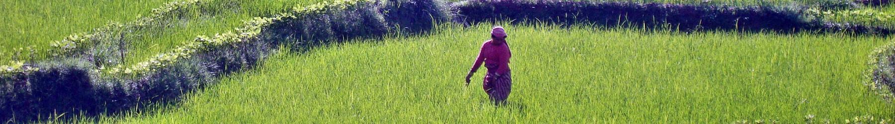 Helfende Hände für Nepal